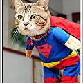 Supercat Puma!!