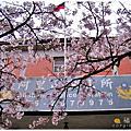 990319阿里山賞櫻花