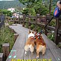 陽明山 竹子湖