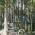 馬武督探索森林