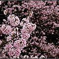 春天訪花去