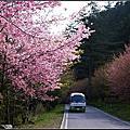 2011-03-03-04 武陵