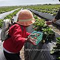 2011.6 採草莓
