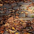 秋天 紐約