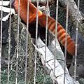 1081109北部木柵動物園一日遊