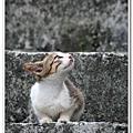 侯硐街貓20090801