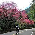 20140203 福山賞櫻+哈盆古道