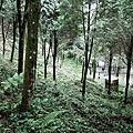 一粒云露營字第015號 - 新竹永茂森林山莊