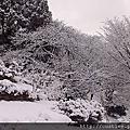 2013/1/28 ~~ 瑞龍寺 + 高岡古城公園