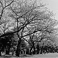 ∥ 2013 東京。春櫻 ∥ → Day 2