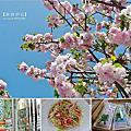 ∥ 2013 東京。春櫻 ∥ → 自由之丘