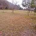 追奧萬大楓葉的尾巴(20101208)