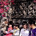 20150217台中泰安派出所櫻花