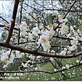 101-0120桃園復興角板山賞梅趣