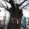 2007冬,日本新年初體驗
