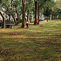0617朴子市打掃公兒二公園