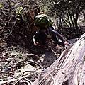 730林道走好走滿的閂山單攻行〈上〉