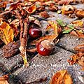 2013.09.01-10.31德國生活-柏林的秋天