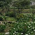 20090214陽明山行