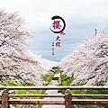 2016 櫻花大綻  平成二十八年