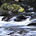 20100522 Sony烏來溪流生態專題攝影之旅