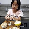【蕙楓農場】40年台南麻豆老欉文旦