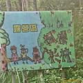 第72露五峰楓櫻杉林