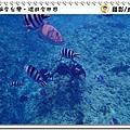 沖繩 青洞浮潛