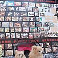 2010.12.23飢餓、囚禁、死亡:買寵物的背後