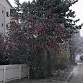 聖誕老人國遊記--Rovaniemi