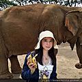 泰國清邁.Nature Elephant Park大象自然公園