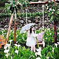 陽明山~竹子湖海芋季.名陽圃咖啡