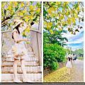 屬於夏天的顏色~黃色~中興大學阿勃勒紀錄