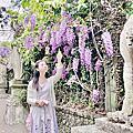 清境1~4月紫藤花季(老英格蘭+霞飛音樂城堡)