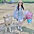 清境4~羊咩咩