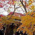 2009 京阪神