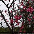【遊記】~2012苗栗苑裡走春~