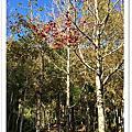 尖石 美樹營地