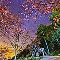 02-14_wuling_sakura