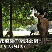 平成21年 櫻花飛舞 相簿封面