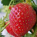 行程-兩水頭.草莓園.晨靜樹木園.春川炒雞排