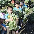 二水鄉農會義賣高麗菜 呼籲多多買菜救救農民