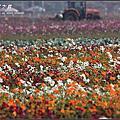 2008-12-28 橋頭花季