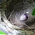 家門外的鳥巢