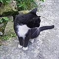 2011-cat's town