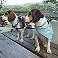 20041211-桃園富田花園農場一日遊