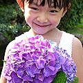 20140531-竹子湖大梯田採繡球花