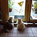 20090607-二訪貓花園