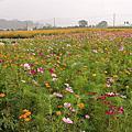 20051105_南庄賞花玩水及虎頭山夜景