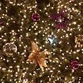 20051220_夜拍聖誕樹